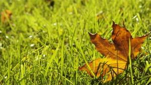 Засеивать газон можно и осенью