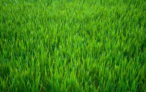 Гарантия на газон